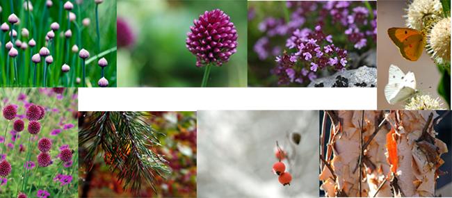 unison-3-plants